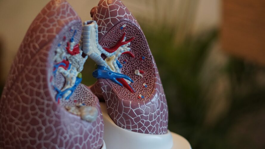 medical diagram of lungs